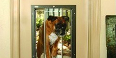 Pet Doors for Kennel Owners image